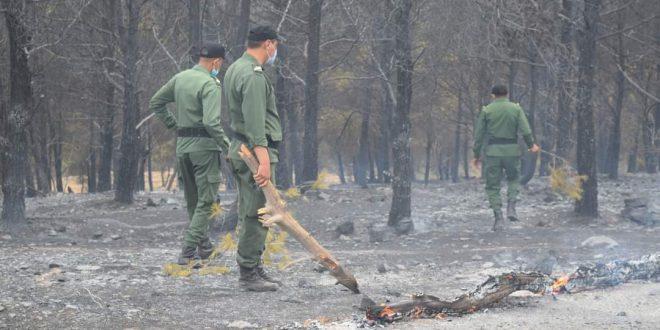 خنيفرة : بالصوت والصورة جبل باموسى حيث النيران تأتي على الأخضر واليابس بسبب صعوبة المسالك الطرقية